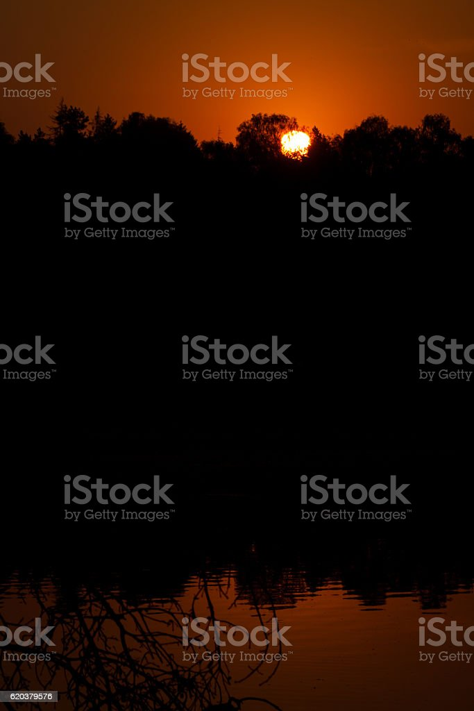 Forest trees outline against the disc of the rising sun. zbiór zdjęć royalty-free