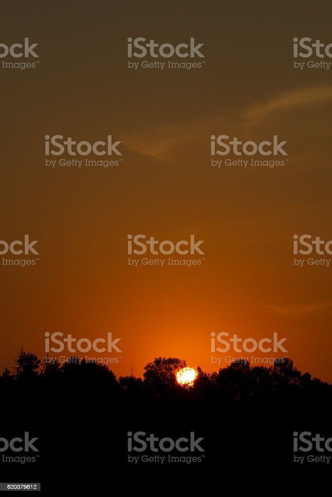 Forest trees outline against the disc of the rising sun. foto de stock royalty-free