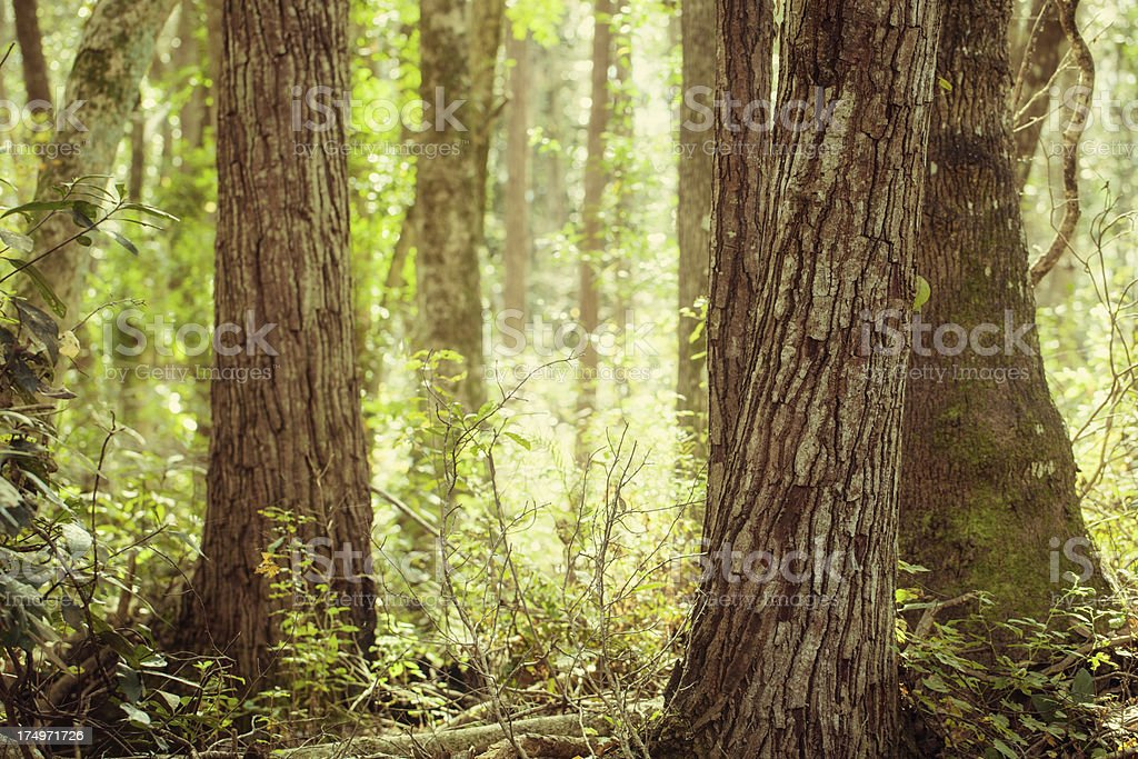 forest trees stock photo