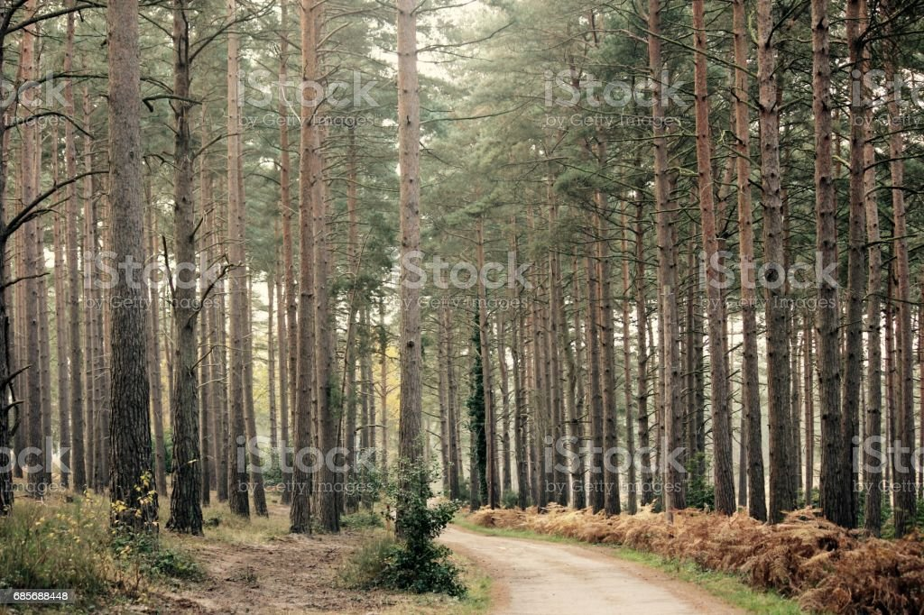 Forest trees royalty-free 스톡 사진
