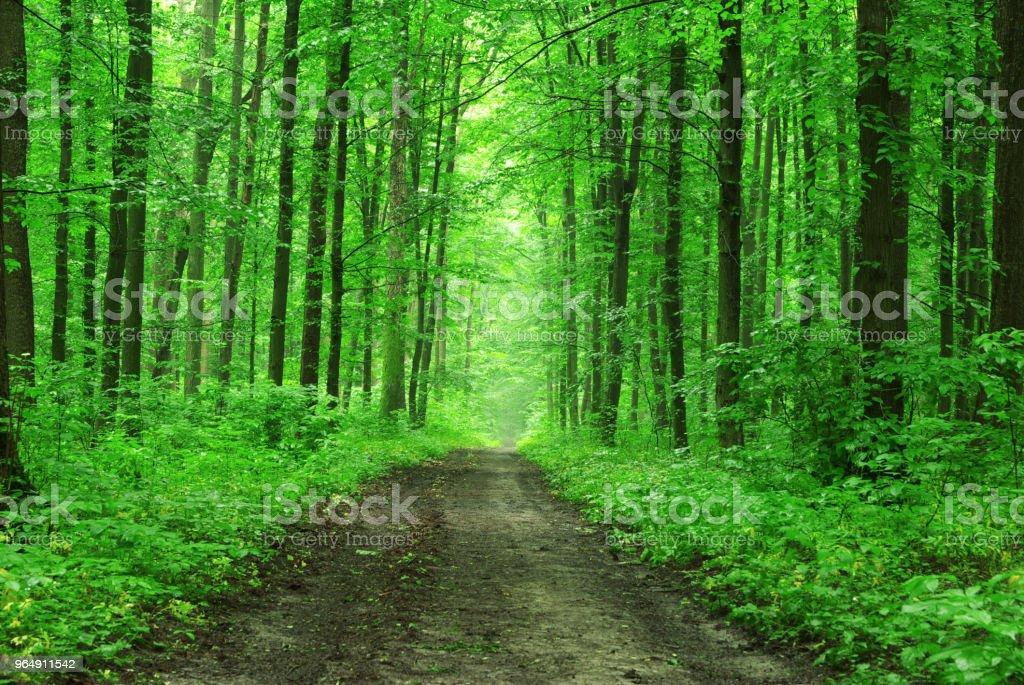 森林樹木 - 免版稅地勢景觀圖庫照片