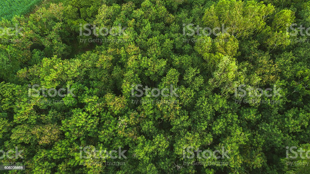 Forest Trees Top View Texture And Background Royalty Free Stock Photo