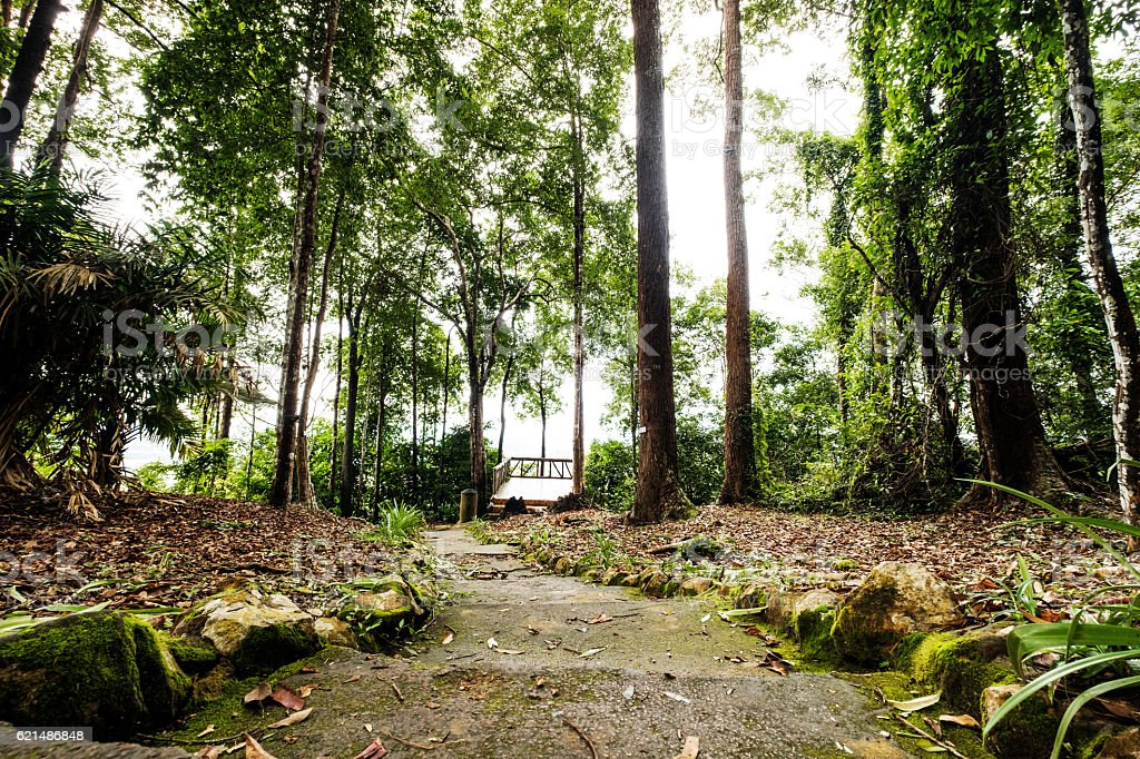 Forest Trees,tropical rain forest with footpath photo libre de droits