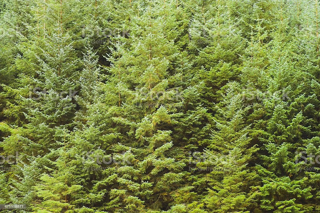 Forest - treetops royalty-free stock photo
