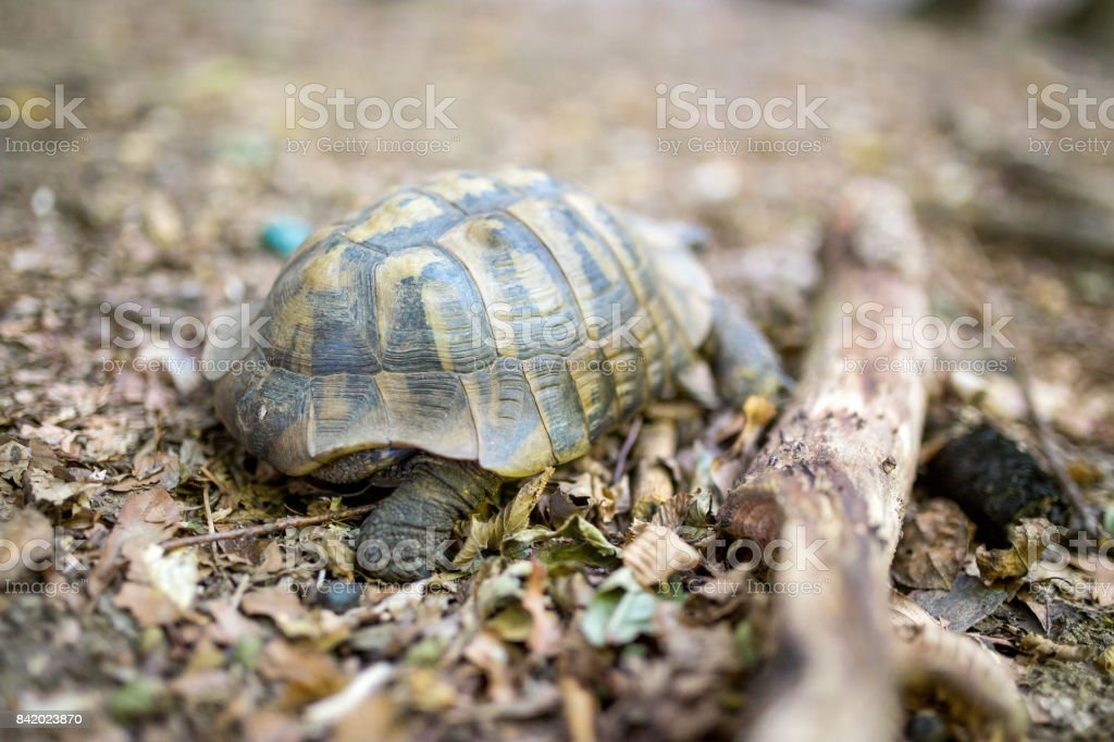 Forest turtle stock photo