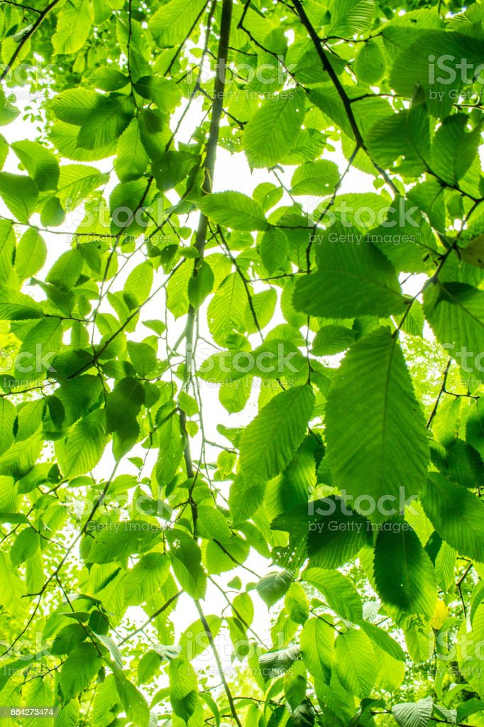 Forest View From Below royalty-free stock photo