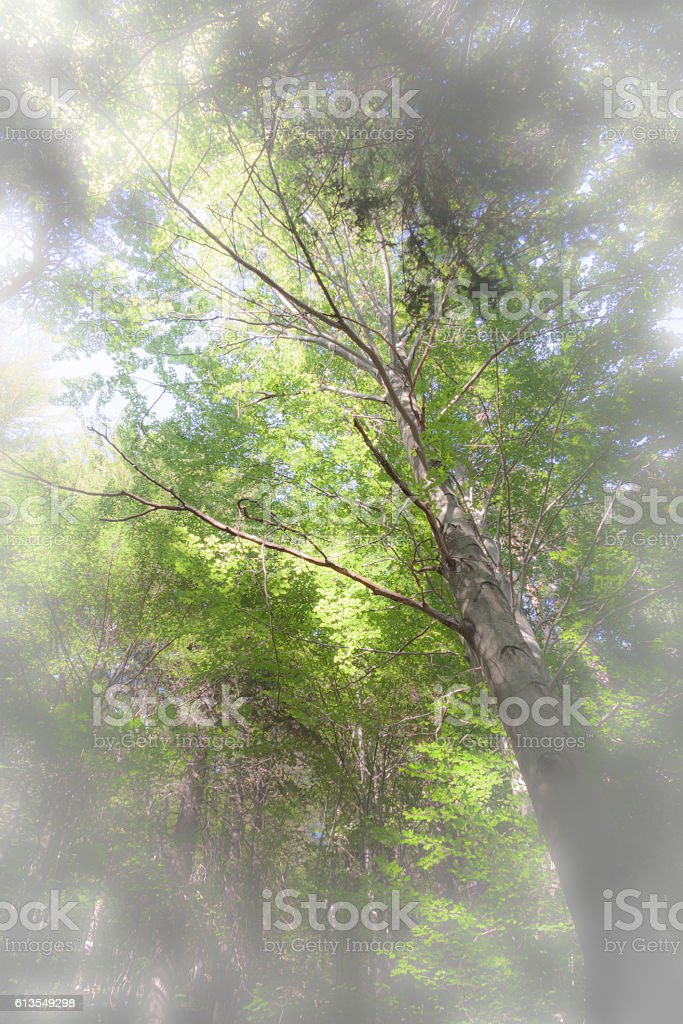 Forest view stock photo