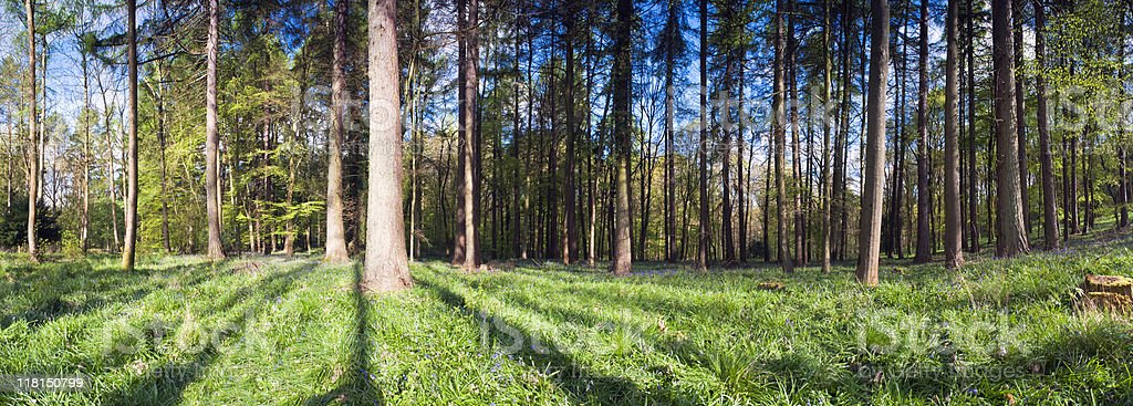 Forest views. royalty-free stock photo