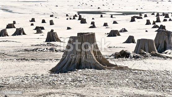 istock Forest Void 1 1225289295