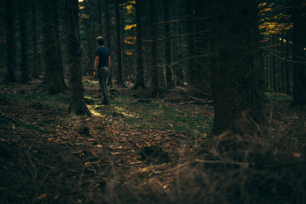 forest walk - forest bathing foto e immagini stock