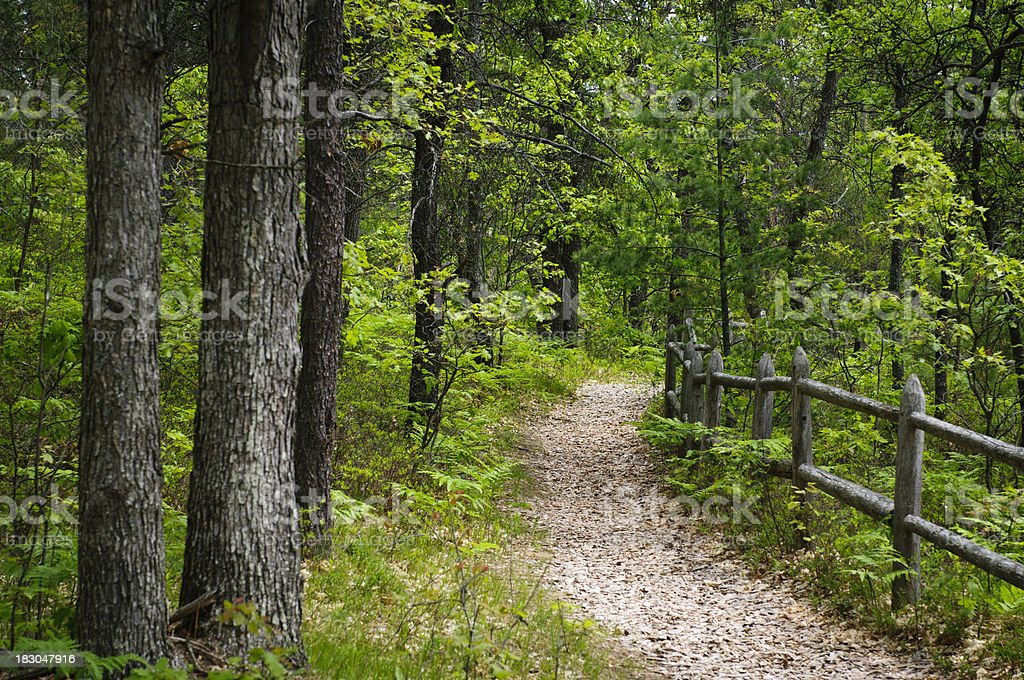 Forest Walkway stock photo