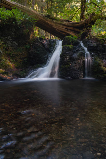 Forest waterfall on Orcas Island, Pacific Northwest United States stock photo