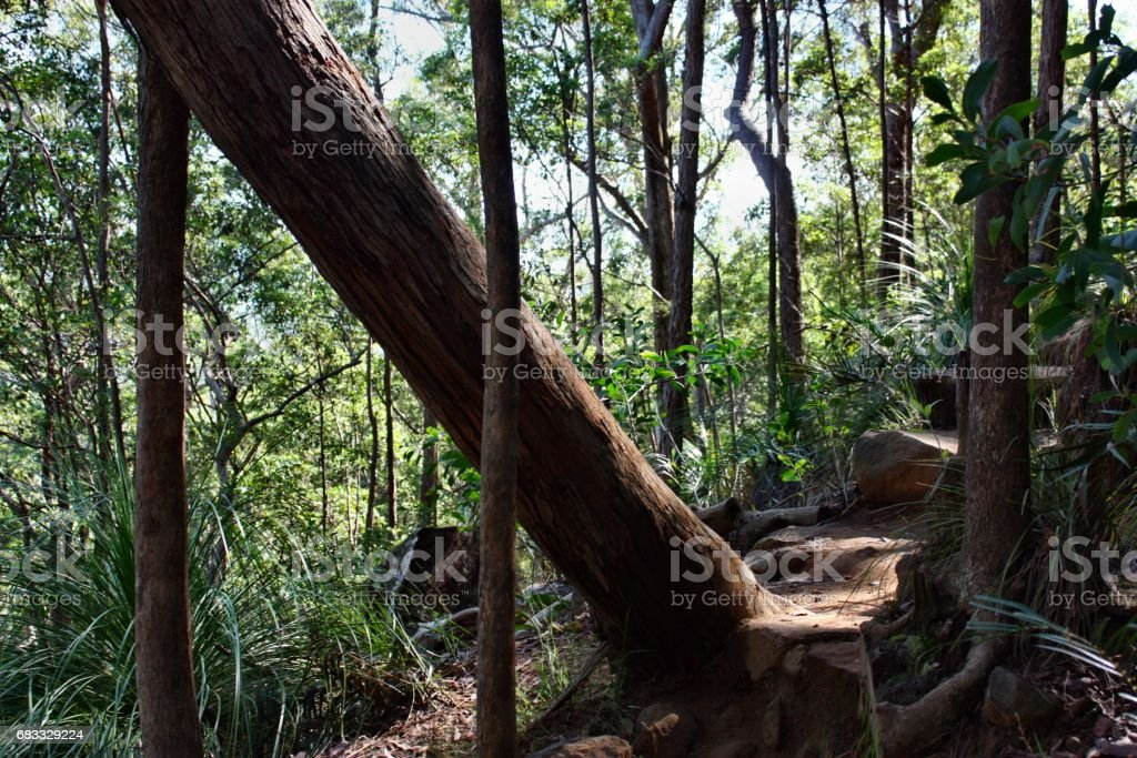 Forest Way at Ngungun Glass House Mountains foto stock royalty-free