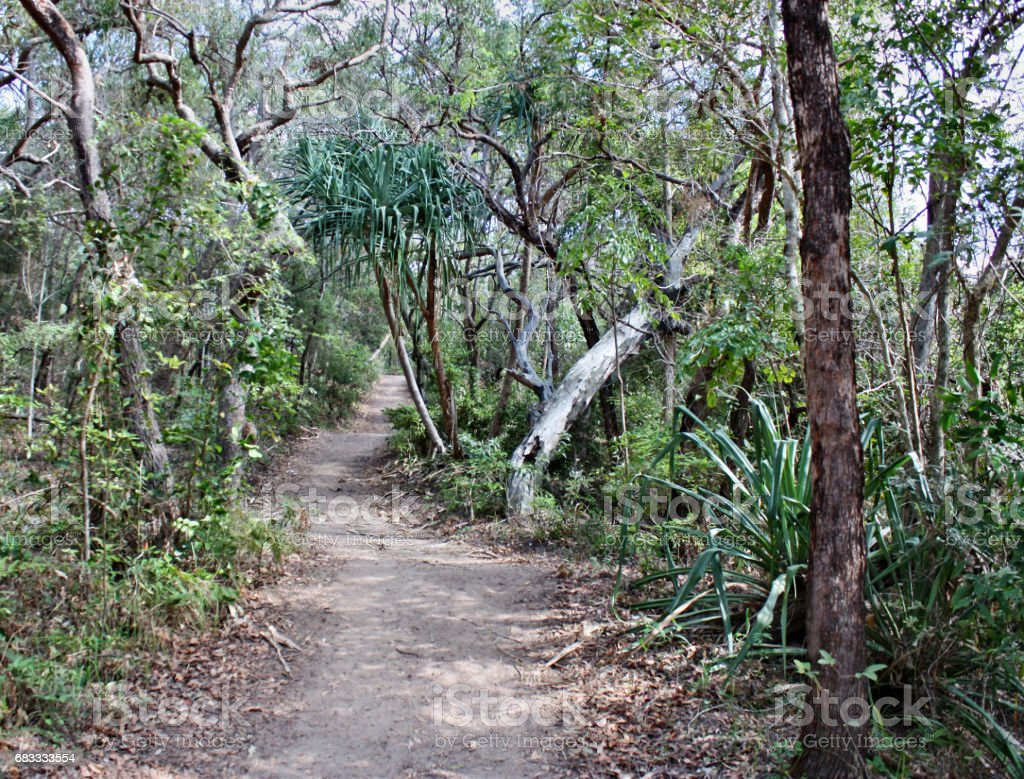 Forest Way at Noosa National Park 免版稅 stock photo