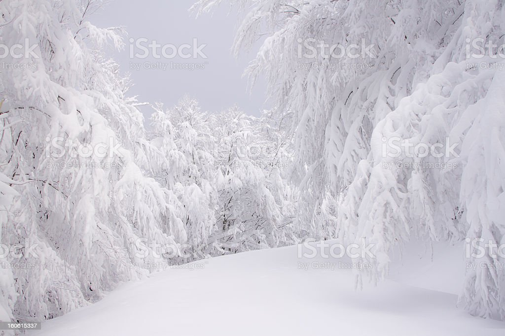 forest way in winter under lot's of snow royalty-free stock photo