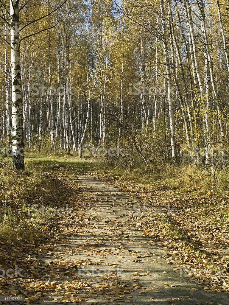 Forest way royalty-free stock photo