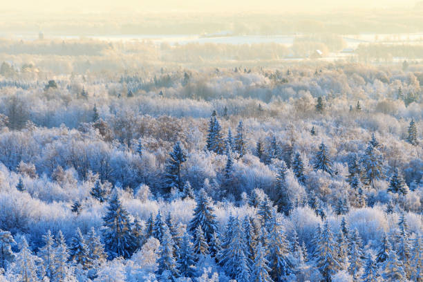 Forest wiev at winter stock photo