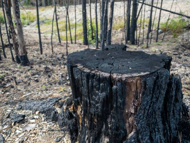 Wald-Wald-Wald-Wald-Nachwirkungen – Foto