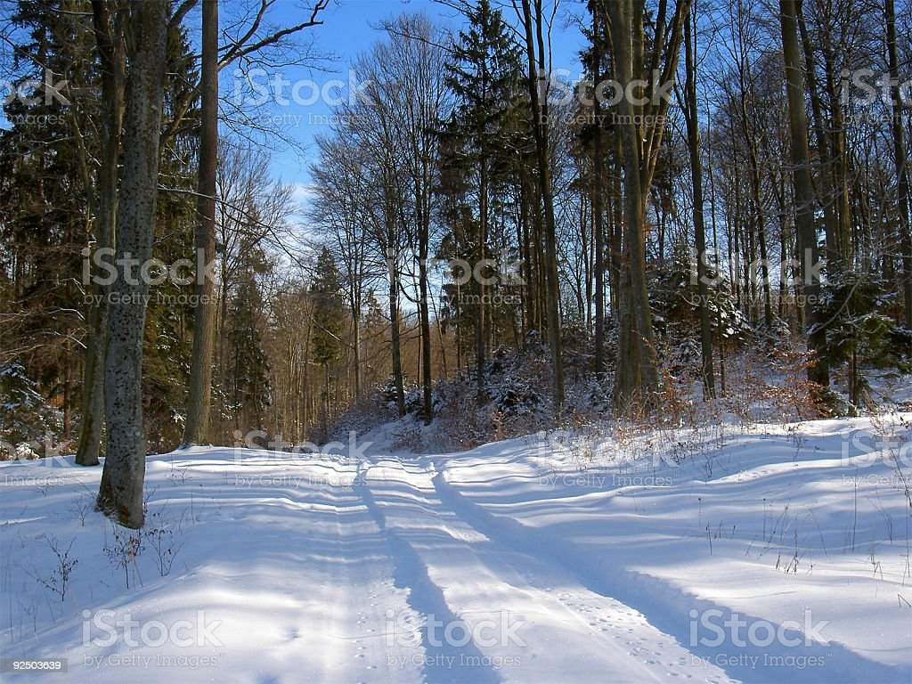 forest winter path stock photo