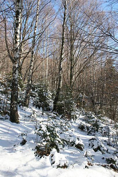 wald winter scenary - dunkle flecken entferner stock-fotos und bilder