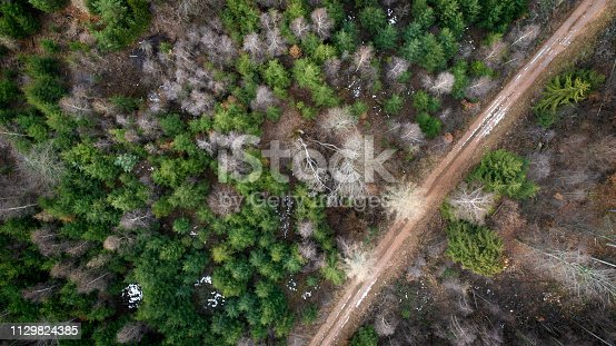 Forest, winter season - aerial view
