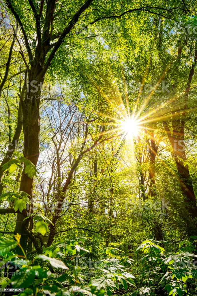 Forest with bright sun stock photo