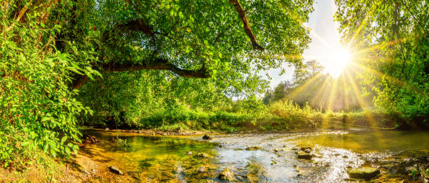 Forest with brook Beautiful forest panorama with brook and bright sun shining through the trees glade stock pictures, royalty-free photos & images