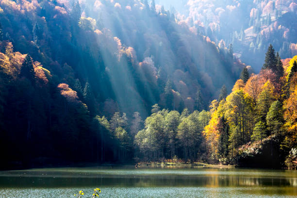 Forest with colorful autumn trees and lake in mountain stock photo