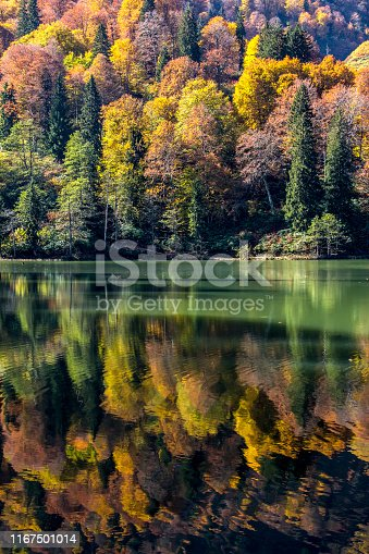 Forest with colorful autumn trees and lake in mountain of Black sea side of Turkey