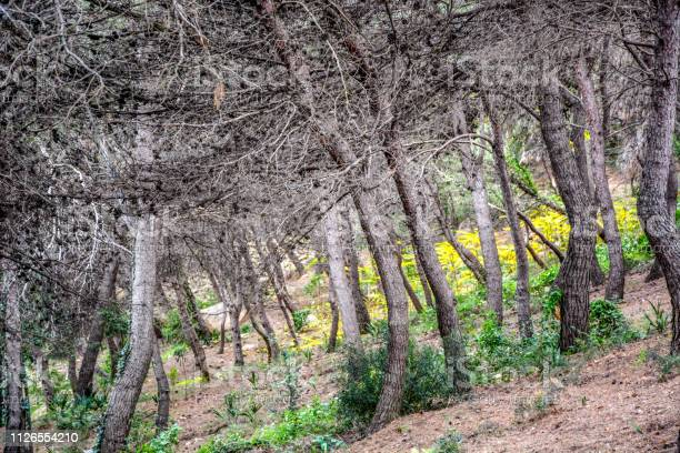 Photo of Forest with cracked brown leaves in autumn, Spain