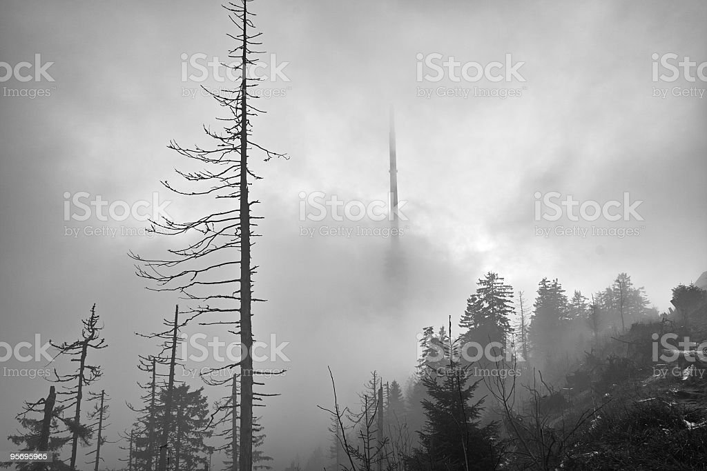 forest with fog in autumn    b/w royalty-free stock photo