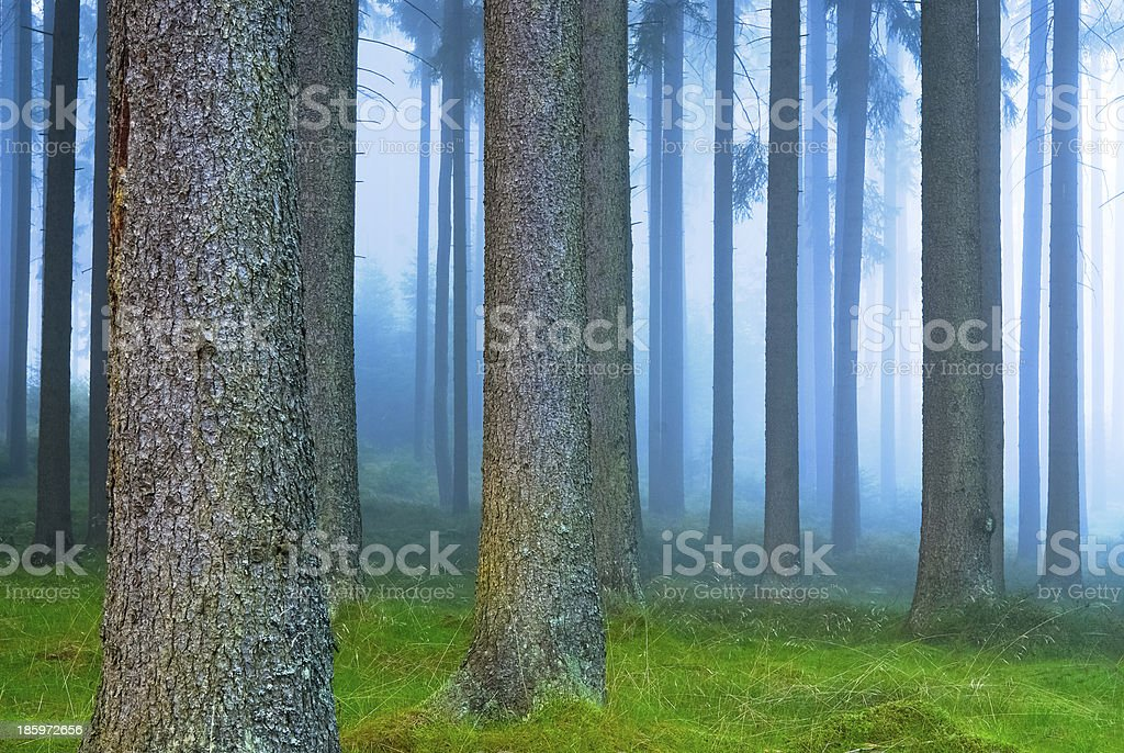 forest with fog in autumn stock photo