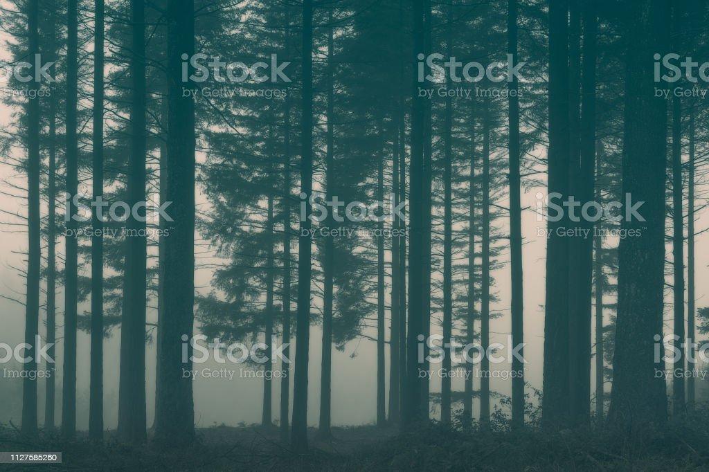 bosque con niebla - foto de stock