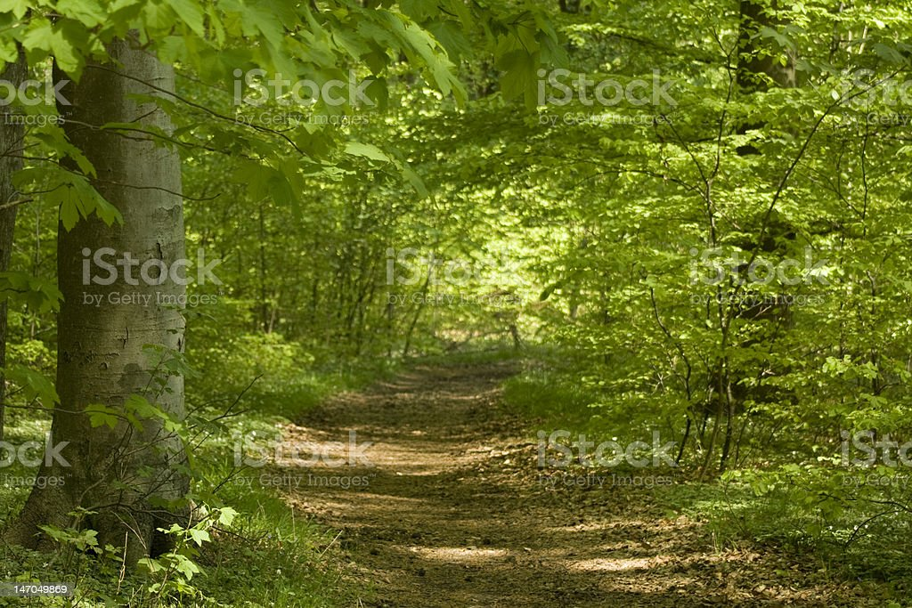 Forest with Footpath in Springtime royalty-free stock photo