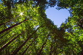 istock Forest with Heart and Sun 1257781183