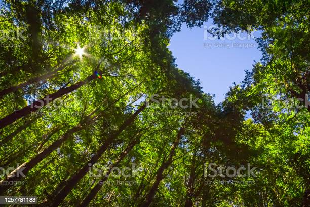 Photo of Forest with Heart and Sun