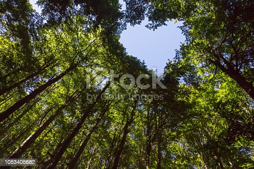 istock Forest with Heart Shaped Blue Sky 1053405882