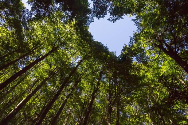心形藍天森林 - 大自然 個照片及圖片檔