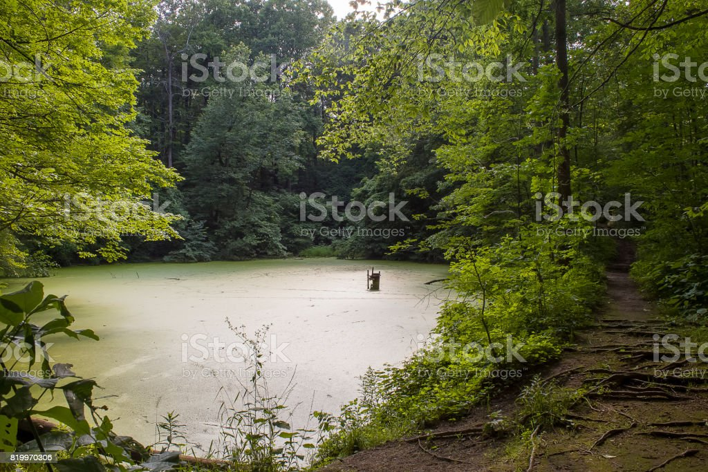 Forest with Lake stock photo