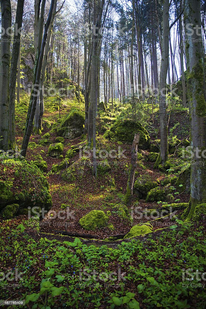 Forest with morning light in Germany stock photo