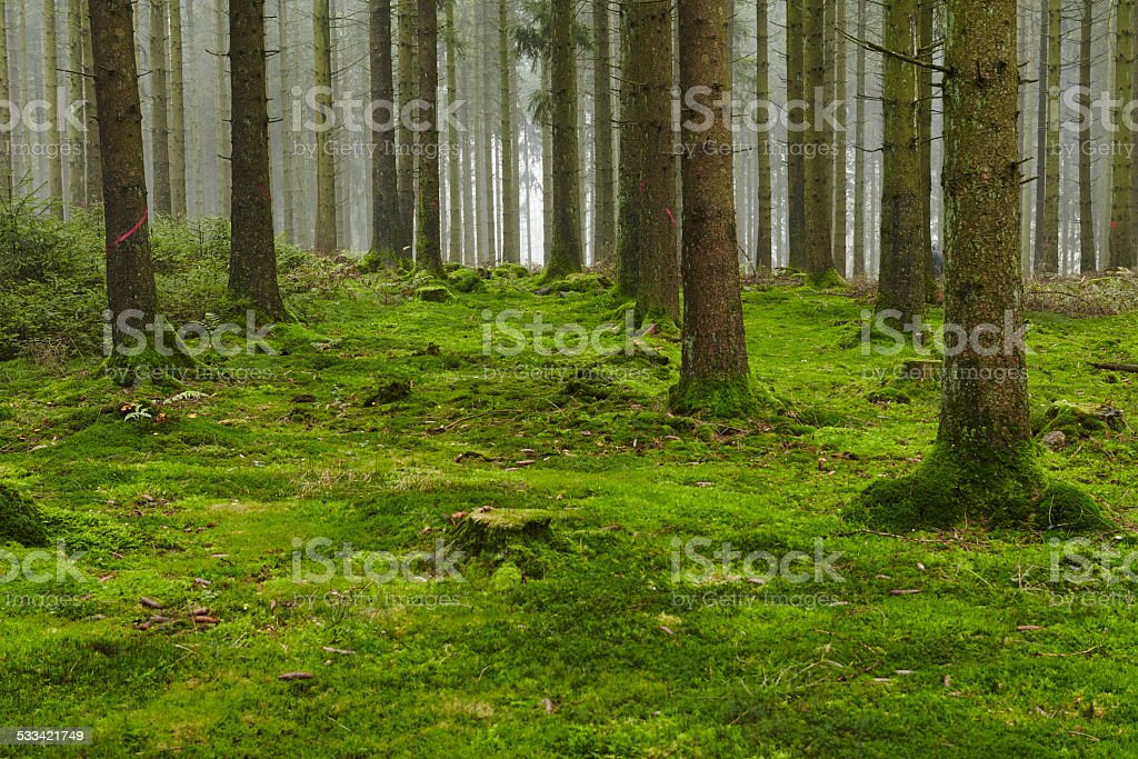 Forest with moss stock photo