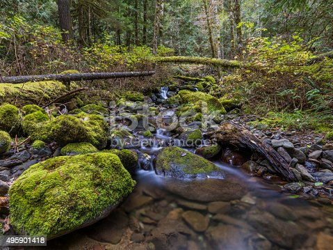 Forest with lush green foliage, mountain stream, moss on stones and yellow leaves,Seattle, WA, USA.