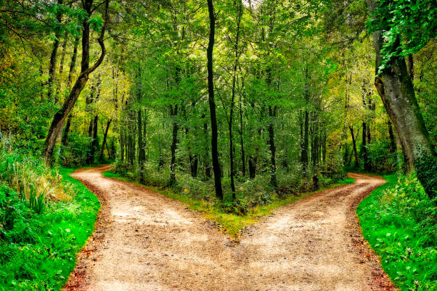 Forest with paths in two directions stock photo