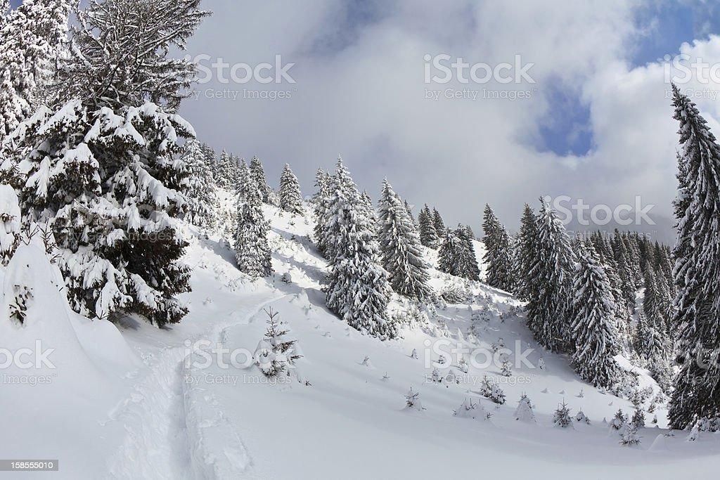 임산, 파인스 겨울 royalty-free 스톡 사진