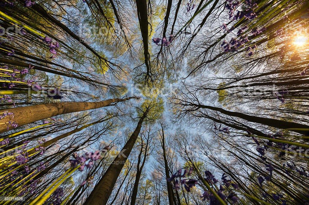 森林、パープルの花 ストックフォト