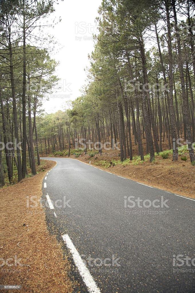Wald mit road Lizenzfreies stock-foto