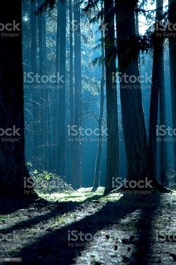 Floresta com sombras e luz do sol - foto de acervo