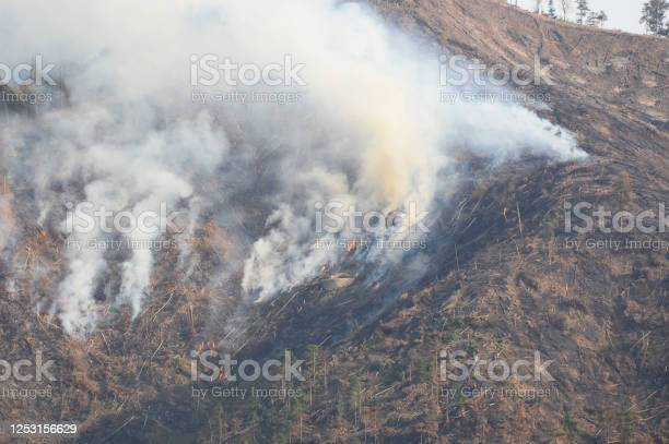 Photo of forest with smoke after wildfire