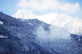 Forest with snow covered peak in background