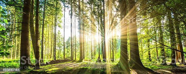 Wald Mit Sonne Stockfoto und mehr Bilder von 2015